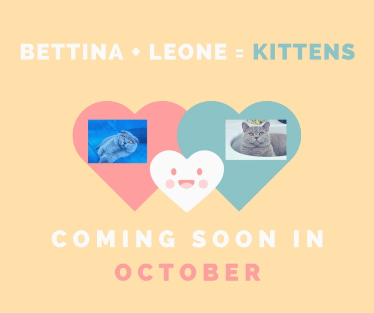Leone + bettina = kittens (1)