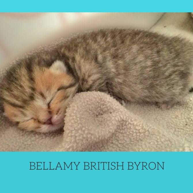 britishbyroncattery