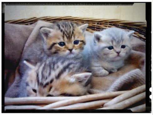 british-byron-kittens-1