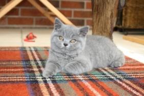 british-byron-kittens-10
