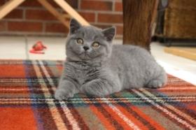 british-byron-kittens-11
