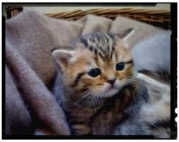 british-byron-kittens-2