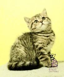 belle-amelie-british-byron-2