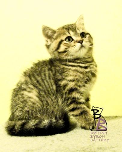 belle-amelie-british-byron-3