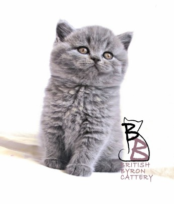 benjamin-edoardo-british-byron-1